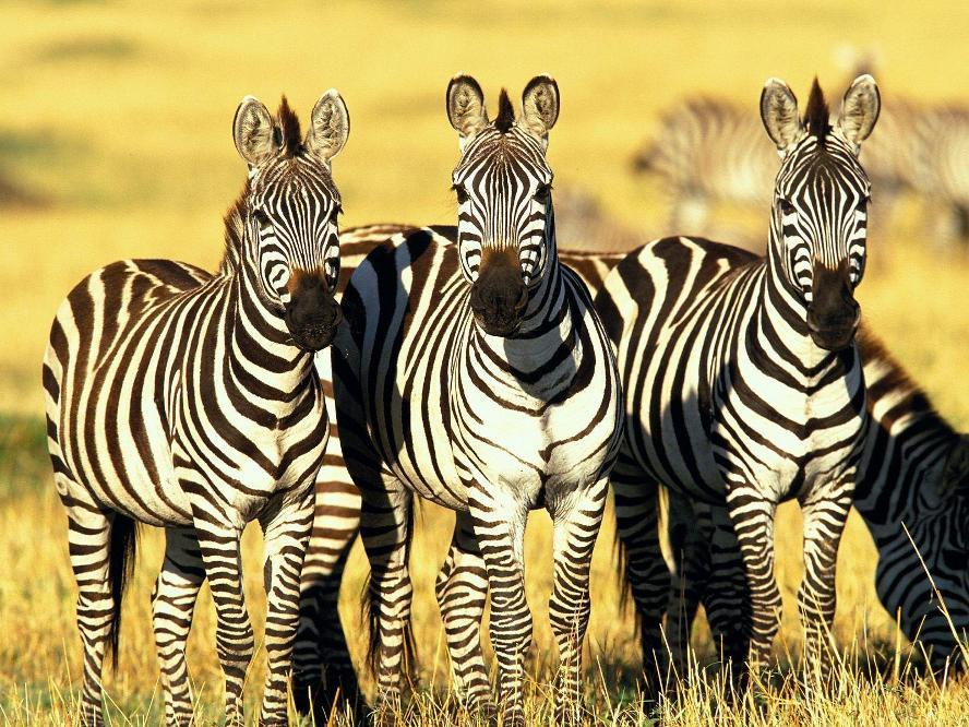 África Oriental Completa