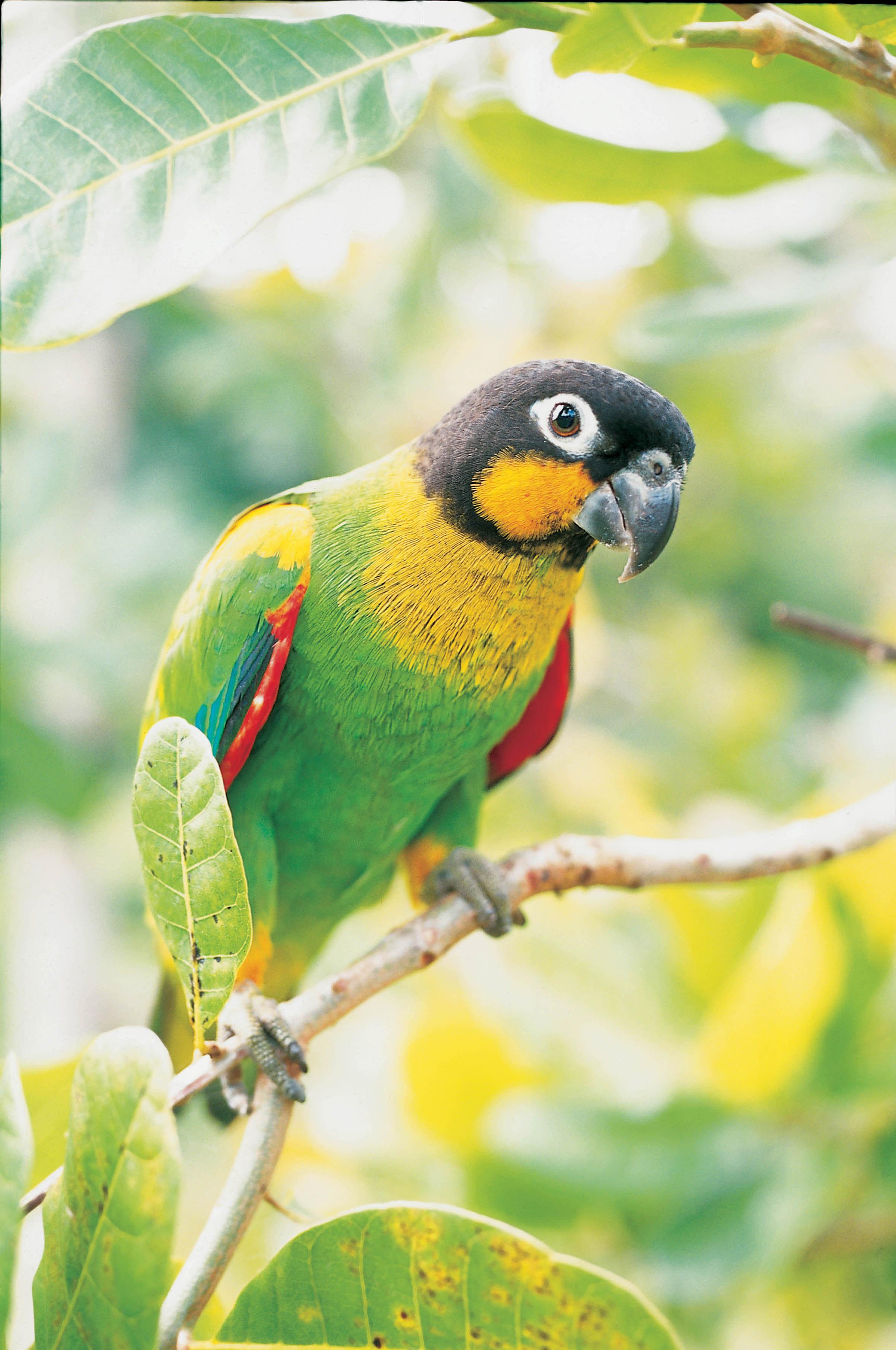 Puerto Maldonado - Reserva Amazónica #113895