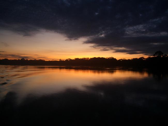 Iquitos - Ceiba Tops #13883